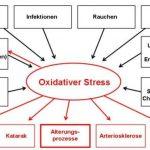 Auswirkungen von Oxidativem Stress